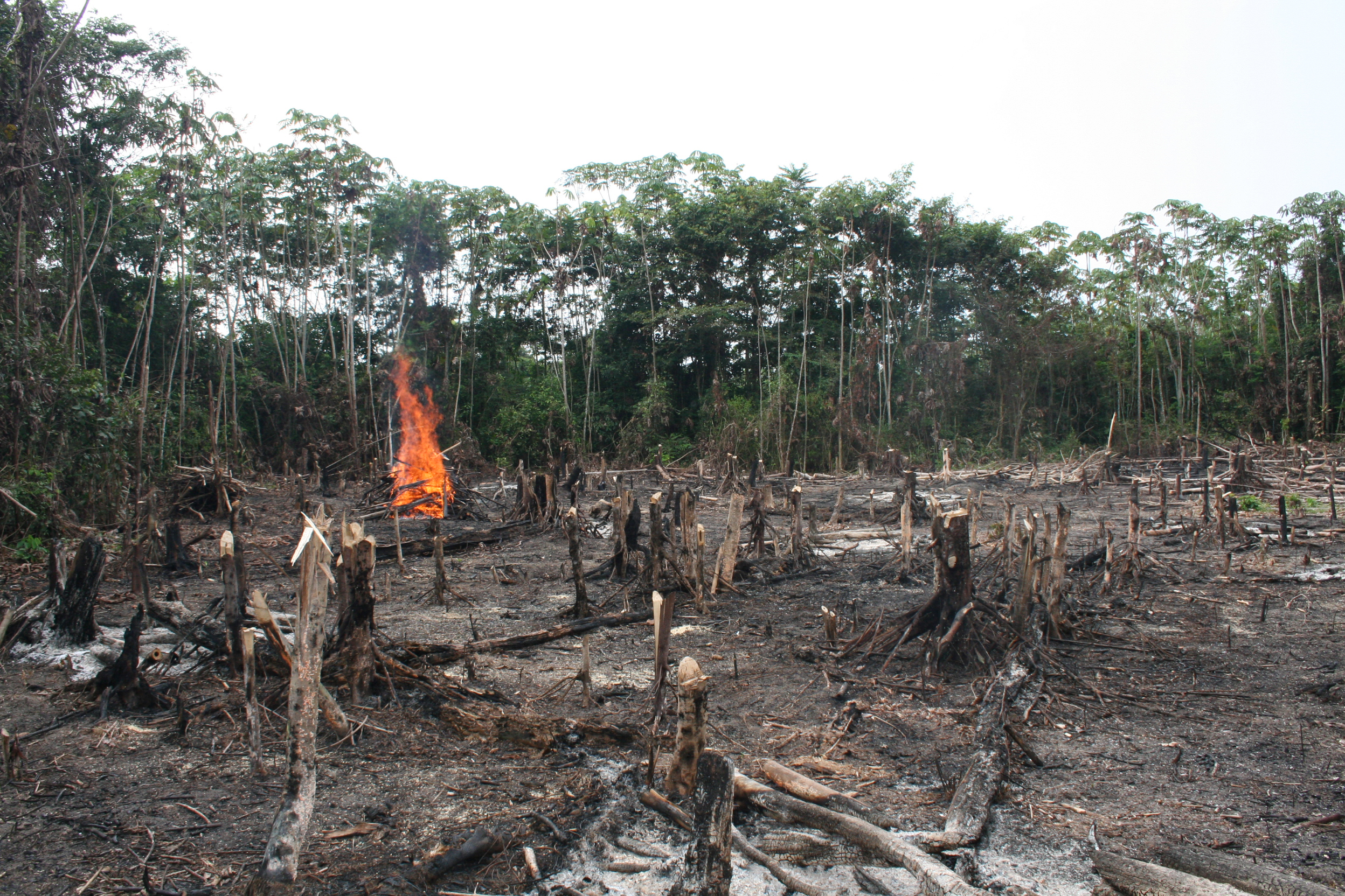 Deforestation is cause by wild fires and or logging