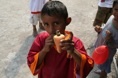 Child of Xixuaú holding a Cashu fruit with the single Cashew nut still attached.