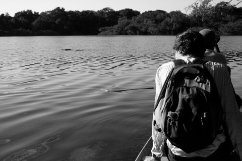 On a Canoe amongst the Jacare' (Crocodiles)
