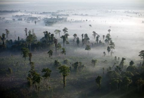 80 per cent of the world's remaining terrestrial biodiversity live in forests