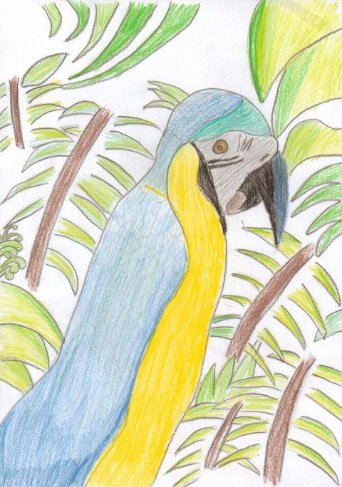 Aimen N - Y6 - Parrot
