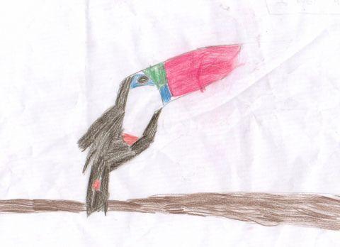 Alanna - Y2 - Toucan
