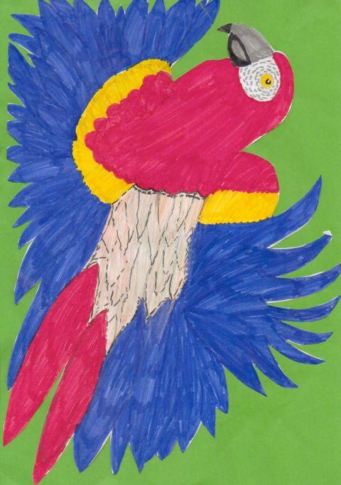 Amy Haggett - Y5 - Parrot