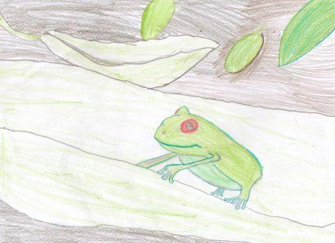 Autumn T - Y6 - frog