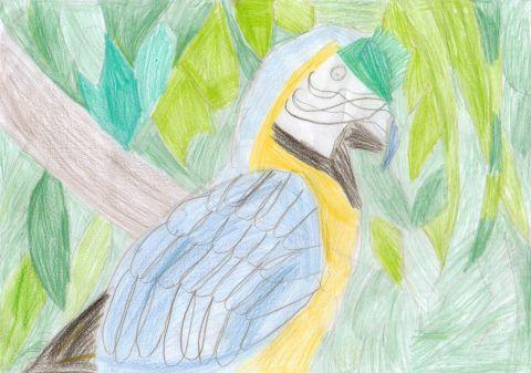 Caillen Clark - Y4 - Parrot