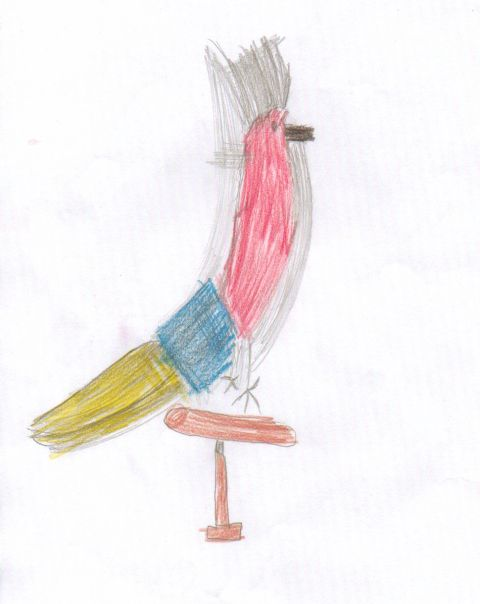 Chris - Y3 - Parrot
