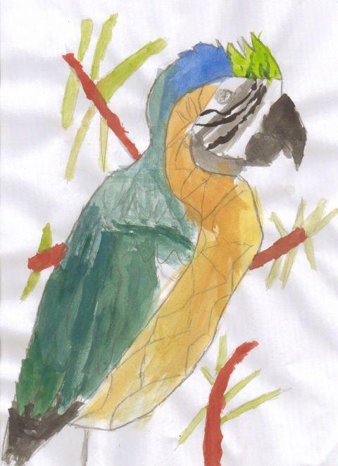 Connor M - Y6 - Parrot