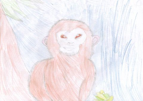 Delenn Christen Gower - Y6 - Monkey