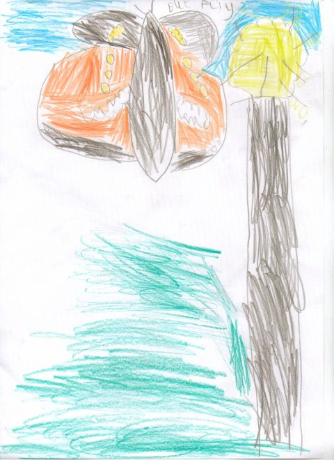 Elis - Y1 - butterfly