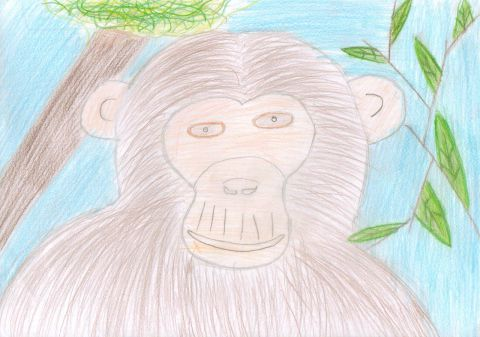 Emily S - Y6 - monkey