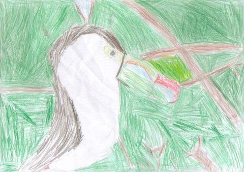 Emily Thomson - Y4 - Toucan