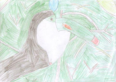 Grace Waters - Y4 - Toucan