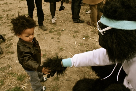 Click here to see all the picture of Boris at the Goat Race.
