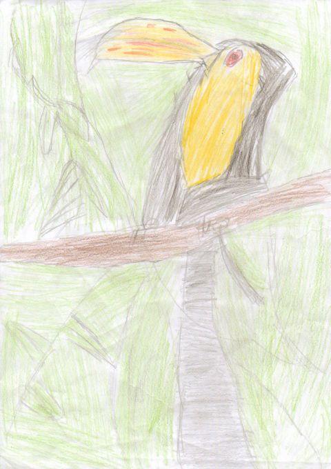 Jack Edwards - Y4 - Toucan