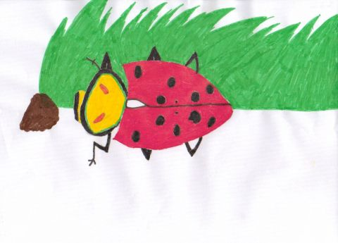 Jacob L - Y5 - Ladybird
