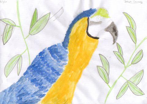 Joseph D - Y6 - Parrot