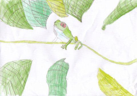 Joshua H - Y6 - frog