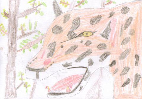 Kieran - Y6 - Jaguar