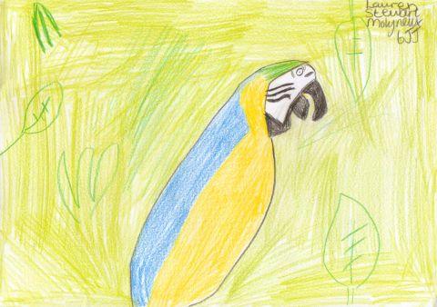 Lauren Stewart Molynew - Y6 - Parrot