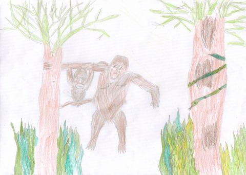 Lewis D - Y6 - Orangutan