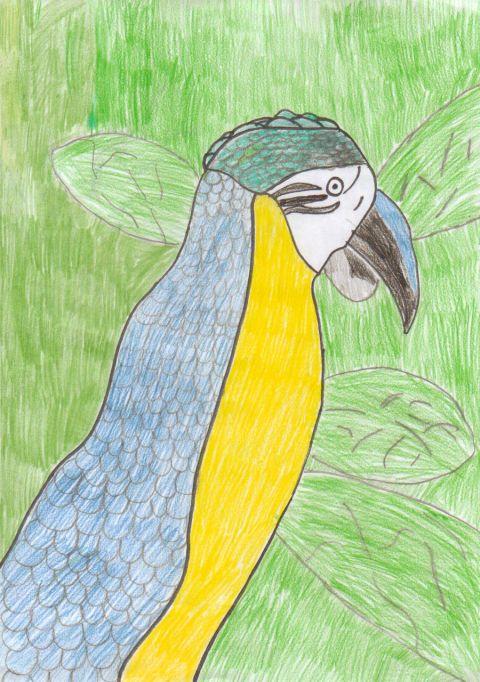Lewis W - Y6 - Parrot