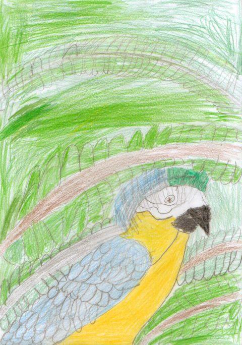 Liam H - Y6 - Parrot