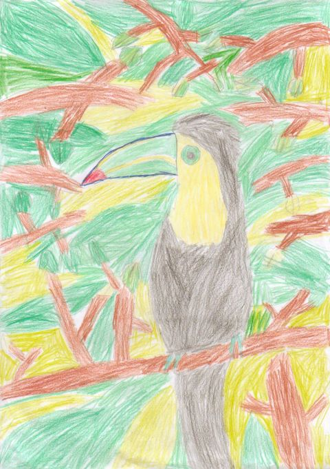 Maddy - Y6 - Toucan