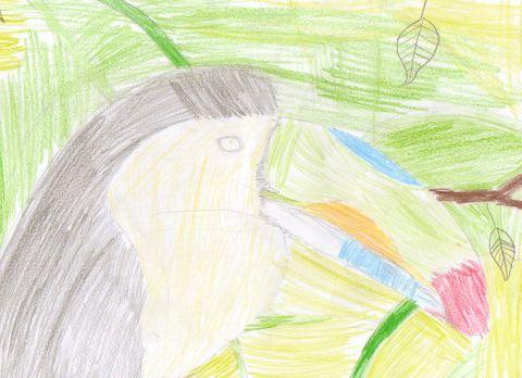 Matthew R - Y6 - Toucan