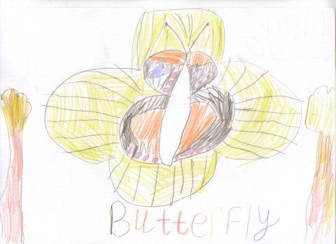 Megan - Y1 - Butterfly