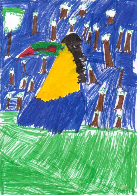 Owen - Y5 - Toucan