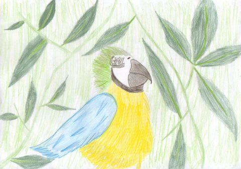 P C - Y6 - Parrot