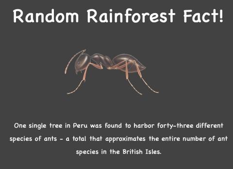 Random fact 6