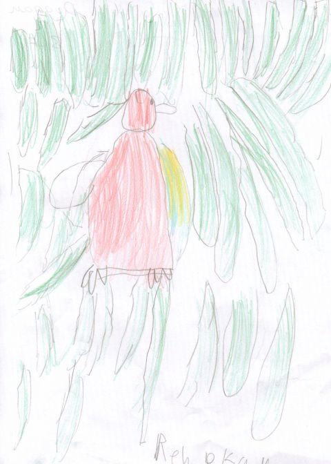 Rebeclan Duggan - Y3 - parrot