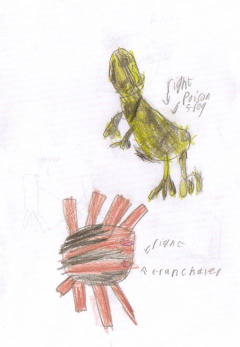 Reece - Y3 - Poison frog - tranchaires