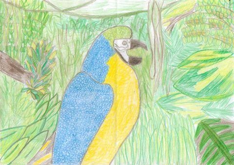 Rhian M - Y6 - Parrot