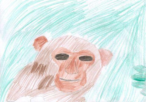 Ryan B - Y6 - Monkey