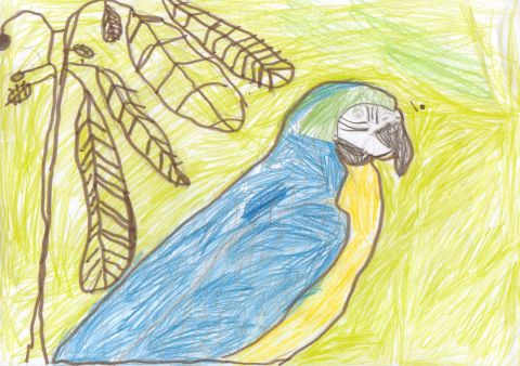 Sam B - Y6 - Parrot