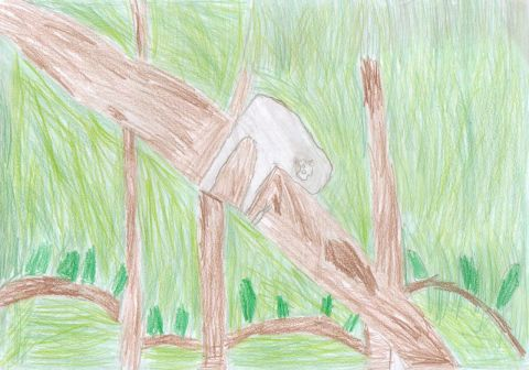 Sam Jones - Y4 - Sloth