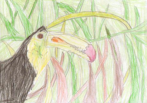 Shae N - Y6 - Toucan
