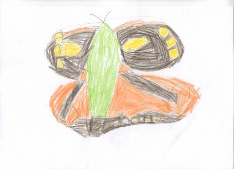 shaun - Y1 - butterfly