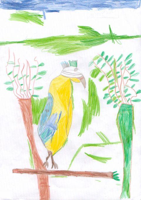 Stephanee - Y4 - Parrot