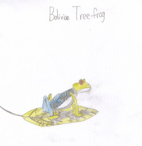 Unknown - Y3 -Bolivian Tree-frog