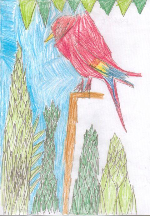 Unknown - Y4 - Parrot
