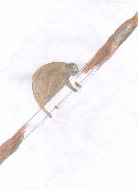 unknown - Y4 - Sloth