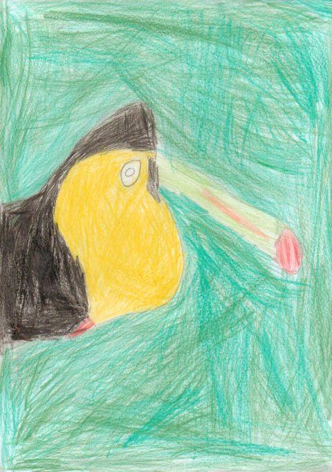 Unknown - Y4 - Toucan