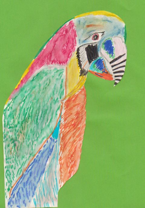 unknown - Y5 - Parrot