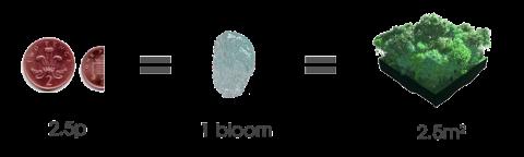 bloom = 2.5p = 2.5m2