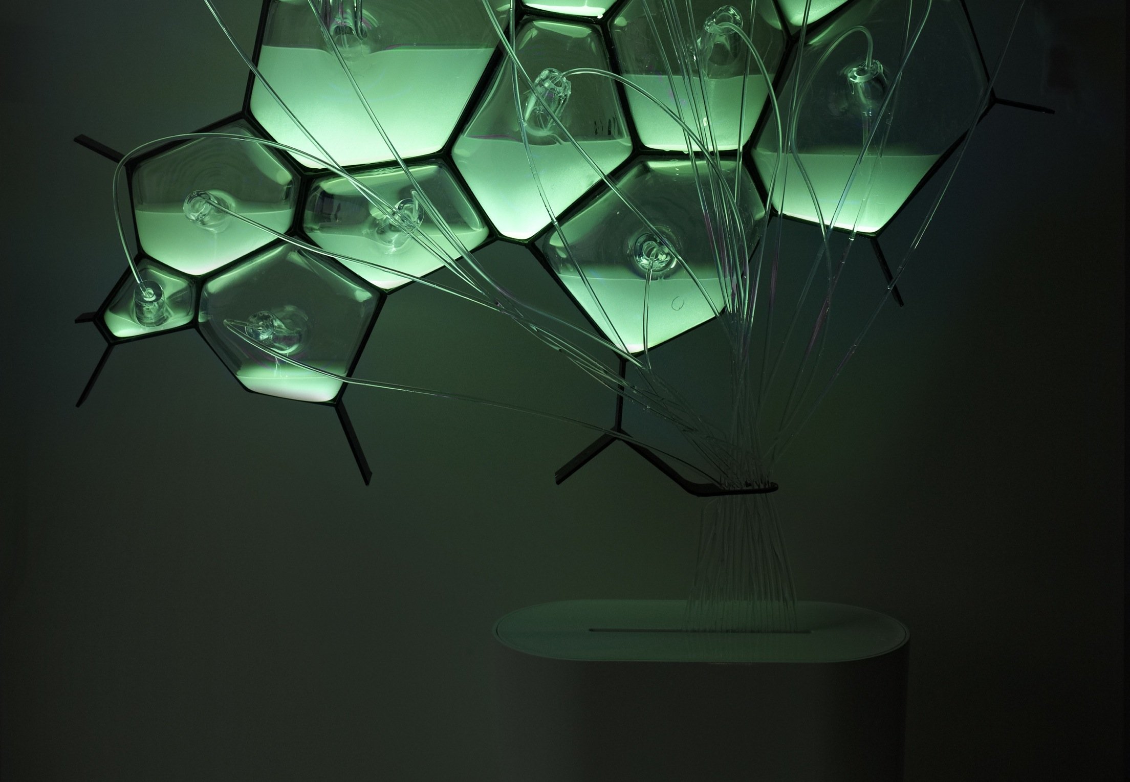 Eco-Design: Bio-Light your home with bioluminescent bacteria ...