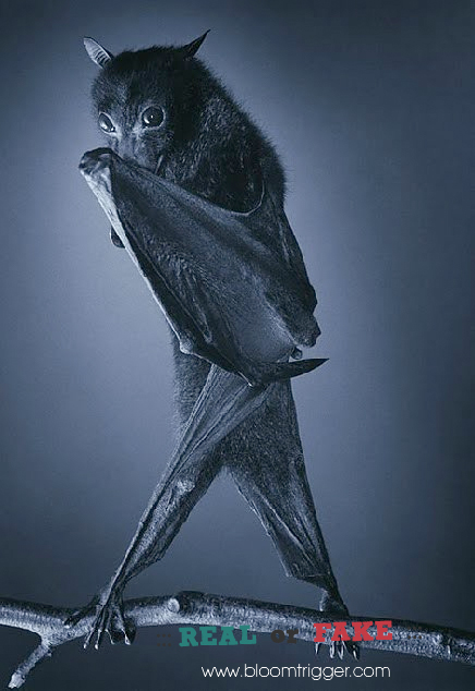Bat real or fake
