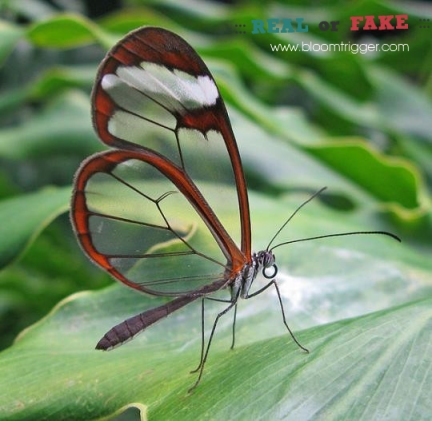 Butterfly real or fake